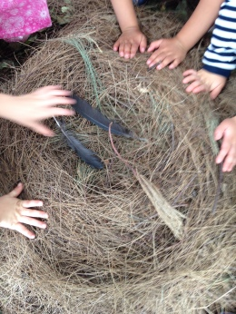 touching nest feathers