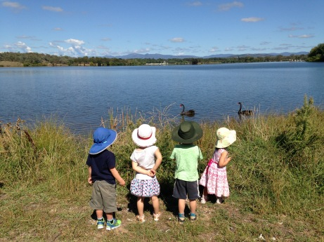 watching swans on lake