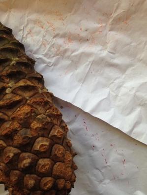 pinecones drawing