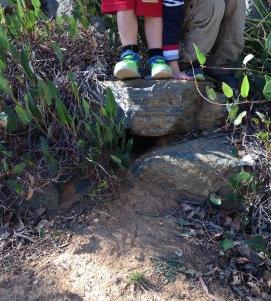 standing on rabbit burrow