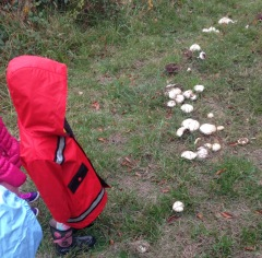 rain walk mushrooms