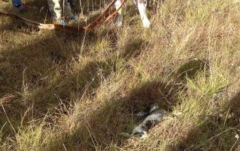 dead rabbit no 2