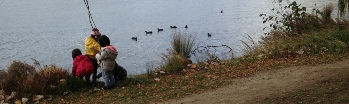 ducks visiting east lake