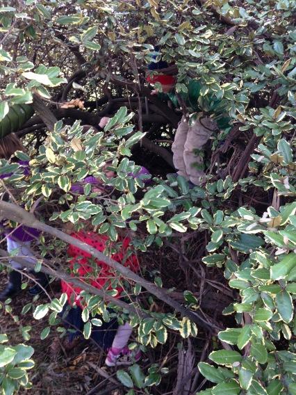 home under bush