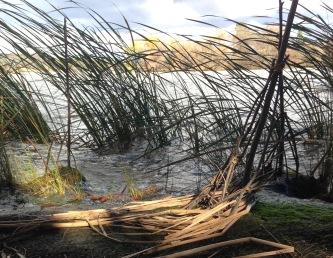 wind by lake - swollen after rain2