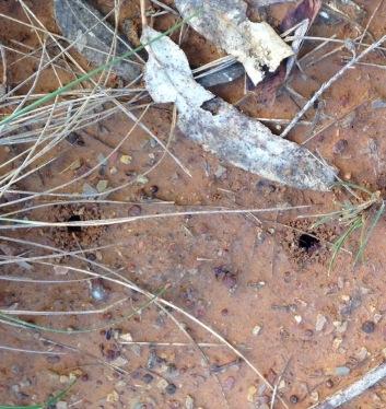 ants nest - after rain3