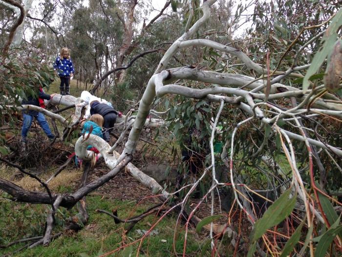 climbing fallen tree 1