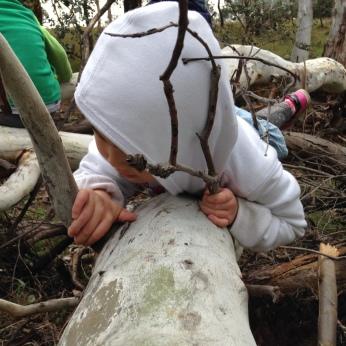 climbing fallen tree 2