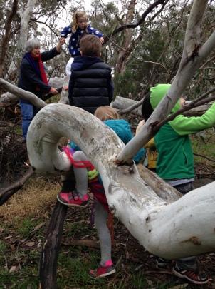 climbing fallen tree 3