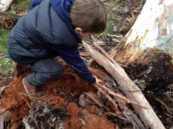 roots of fallen tree