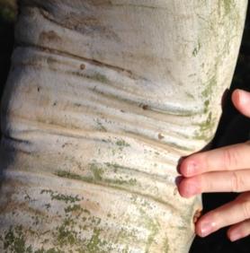 feeling tree wrinkles