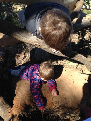 possum in tree watching boy