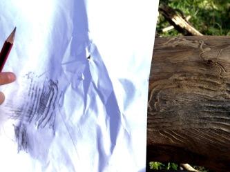 worm mark rubbings