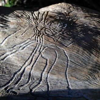 Worm patterns