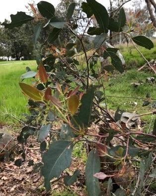 new-shoots-on-tree