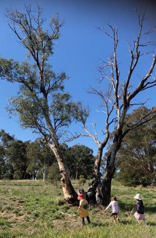 tree half dead alive1